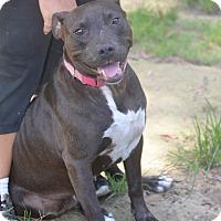 Adopt A Pet :: London - Daleville, AL