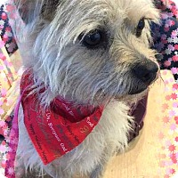 Adopt A Pet :: Adopted!!Dory - S. TX - Tulsa, OK