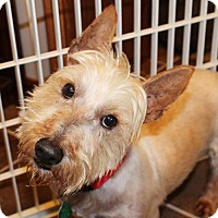 Adopt A Pet :: GIACOMO IN TX - Fort Worth, TX