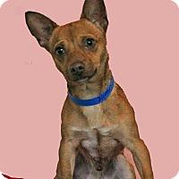 Adopt A Pet :: Charlie - Waldorf, MD