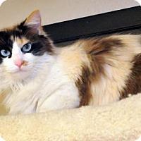 Adopt A Pet :: Penelope - Tulsa, OK