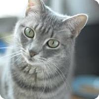 Adopt A Pet :: Winter Willow - Richmond Hill, ON