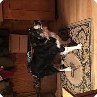 Adopt A Pet :: Buster Trimble - Staunton, VA