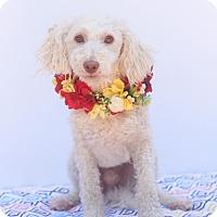 Adopt A Pet :: Charlie - Loomis, CA