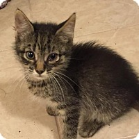 Adopt A Pet :: .Riesling - Baltimore, MD