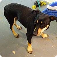 Adopt A Pet :: Beau - Delaware, OH