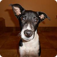 Adopt A Pet :: Blinky - Appleton, WI