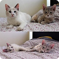 Adopt A Pet :: Azul & Luna - Los Angeles, CA