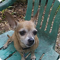 Adopt A Pet :: Weezie - Tampa, FL