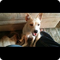 Adopt A Pet :: Polyanna (adoption pending) - Matawan, NJ