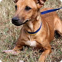 Adopt A Pet :: Autumn Marie~meet me~ - Glastonbury, CT