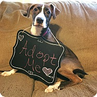 Adopt A Pet :: Avery - Grand Rapids, MI