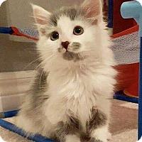 Adopt A Pet :: Livvie - Hamilton, ON