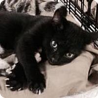 Adopt A Pet :: Cinder - Greensburg, PA