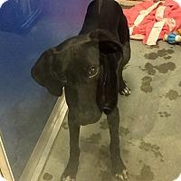 Adopt A Pet :: Eric - Wilmington, DE