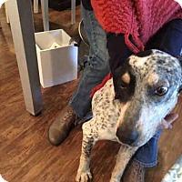Adopt A Pet :: CHEWEY - Louisville, KY