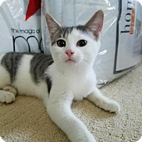 Adopt A Pet :: Pammy - Oakhurst, NJ