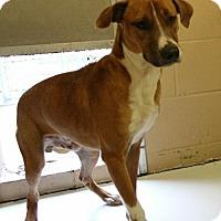 Adopt A Pet :: Atwater - Hilton Head, SC