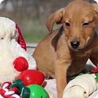 Adopt A Pet :: Alita - Von Ormy, TX