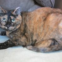 Adopt A Pet :: Chloe Rainbow - Kingston, WA