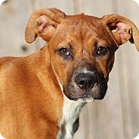 Adopt A Pet :: Princess - Humble, TX
