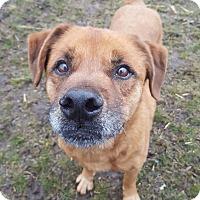 Adopt A Pet :: Spencer - Schaumburg, IL