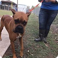 Adopt A Pet :: Waska - Austin, TX