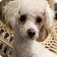 Adopt A Pet :: Tucker - Waco, TX