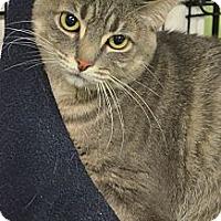 Adopt A Pet :: rhianna - Muskegon, MI