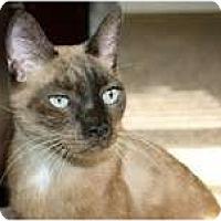Adopt A Pet :: Sammy - Arlington, VA