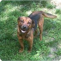 Adopt A Pet :: Paola - Mocksville, NC