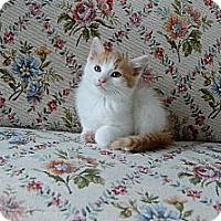 Adopt A Pet :: Patsy - Jeffersonville, IN