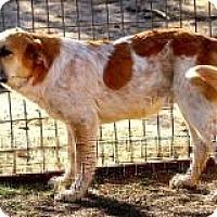 Adopt A Pet :: John John - Stafford Springs, CT
