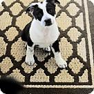Adopt A Pet :: Mopsy