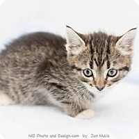 Adopt A Pet :: Prudence - Fountain Hills, AZ