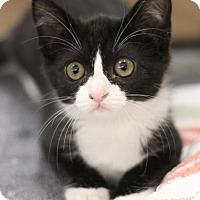 Adopt A Pet :: Rose - Sacramento, CA