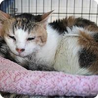 Adopt A Pet :: Bella Bunny - Chicago, IL