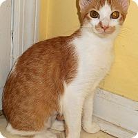Adopt A Pet :: Kaelyn - Chattanooga, TN