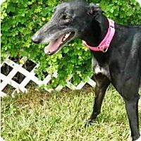 Adopt A Pet :: Luna - Hialeah, FL