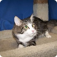 Adopt A Pet :: K-Apple3-Kennie - Colorado Springs, CO