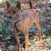 Adopt A Pet :: Penny - Bedminster, NJ