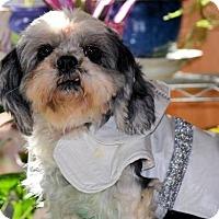 Adopt A Pet :: Cookie - Pueblo, CO