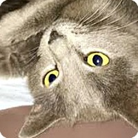 Adopt A Pet :: Azul - LaJolla, CA