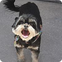 Adopt A Pet :: Maggie - Henderson, NV