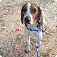 Adopt A Pet :: JAX - Ventnor City, NJ