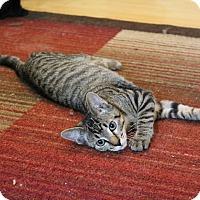 Adopt A Pet :: Paul Stanley - St. Louis, MO