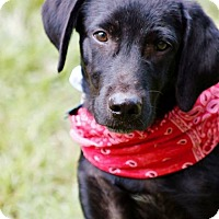 Adopt A Pet :: Deepak meet me 8/5 - Manchester, CT