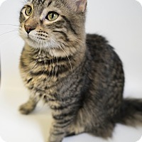 Adopt A Pet :: Marvin - Rapid City, SD