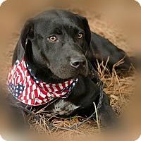 Adopt A Pet :: Teddy - Athens, GA