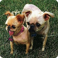 Adopt A Pet :: OLIVIA & BOB near KANSAS CITY - Denver, CO